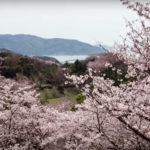 【開山公園】2019年の桜祭りはいつ?開山の花見は自転車がおすすめ。