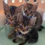 しまなみの瀕死の子猫を元気に育てる活動に一緒に支援しませんか?